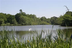 5 of the UK's top coarse fishing locations