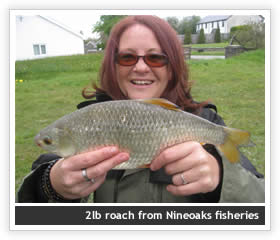 2lb roach from Nineoaks Fisheries