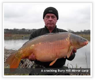 Bury Hill Mirror carp