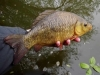 Catch a Crucian photographic competition | National Crucian Conservation Project (NCCP)